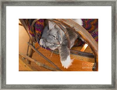 Cat Asleep In A Wooden Rocking Chair Framed Print by Louise Heusinkveld
