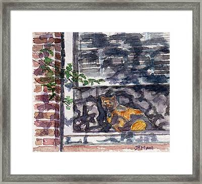 Cat Behind The Screen Framed Print by Julie Maas