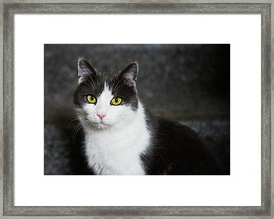 Cat Black And White With Green And Yellow Eyes Framed Print by Matthias Hauser