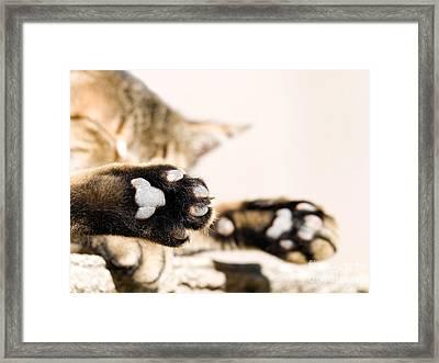 Cat Break Framed Print