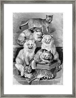 Cat Breeds Framed Print