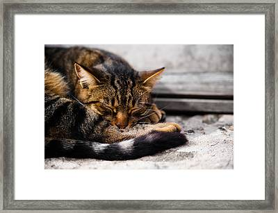 Cat Framed Print by Daniel Kocian