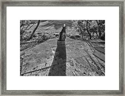 Cat Day Afternoon Framed Print