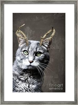 Cat Deer Framed Print by Diane Miller
