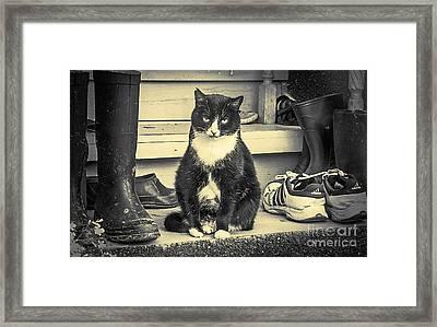 Cat Framed Print by Evgeniy Lankin