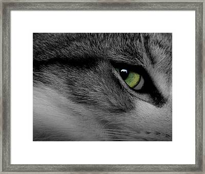 Cat Eye Framed Print by AR Annahita