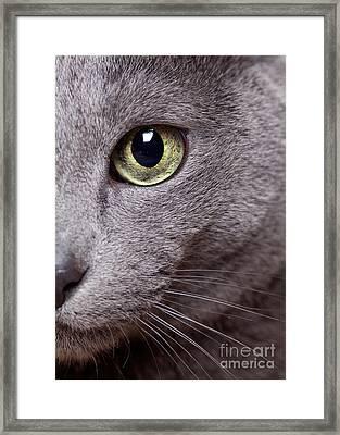 Cat Eye Framed Print by Nailia Schwarz