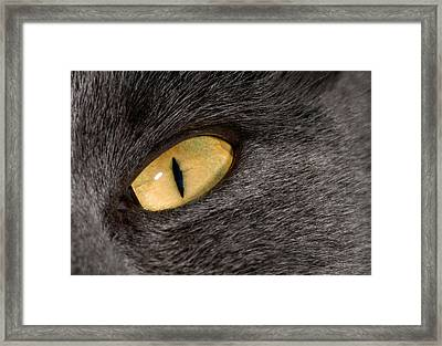 Cat Eye Framed Print by Nigel Downer