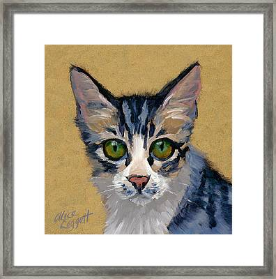 Cat Eyes Framed Print by Alice Leggett