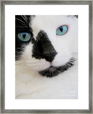 Cat Eyes Framed Print by Birgit Tyrrell