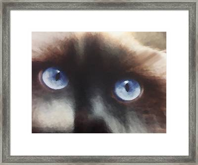 Cat Eyes Mixed Media By Dennis Buckman