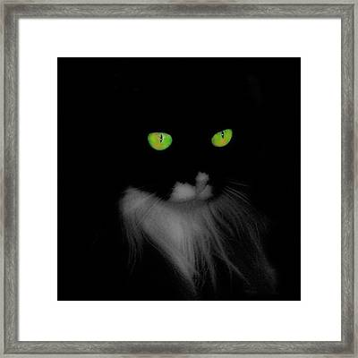 Cat Eyes Framed Print by Gothicrow Images