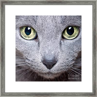 Cat Eyes Framed Print by Nailia Schwarz