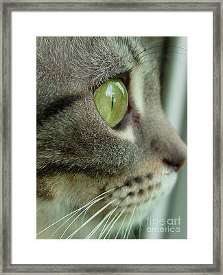 Cat Face Profile Framed Print by Amy Cicconi