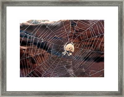 Framed Print featuring the photograph Cat Faced Spider by Tarey Potter