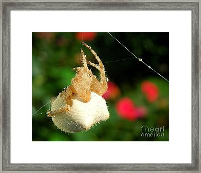 Cat-faced Spider With Pink Framed Print
