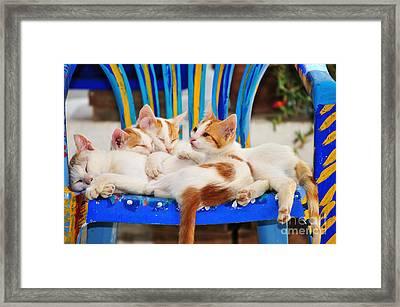 Cat Family In Sifnos Island Framed Print