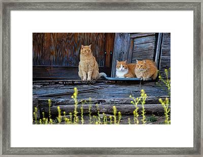 Cat (felis Catus Framed Print