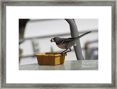 Cat Food Thief Framed Print by Tannis  Baldwin