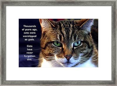 Cat Gods Framed Print