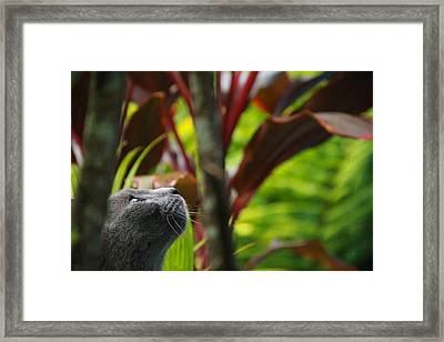 Cat Hunting Framed Print
