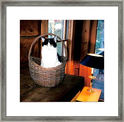 Cat In A Basket Framed Print by Sharon Blanchard