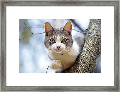Cat In A Tree Framed Print