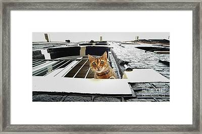 Cat In Amsterdam Framed Print