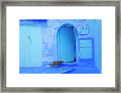 Cat In Doorway, Chefchaouen, Morocco Framed Print by Peter Adams
