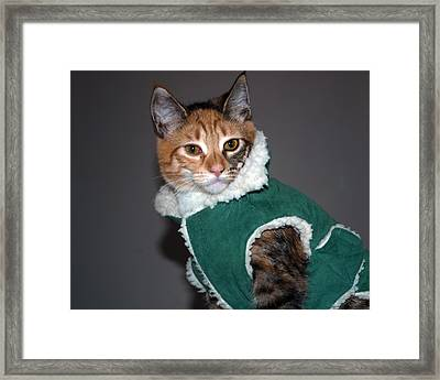 Cat In Patrick's Coat Framed Print