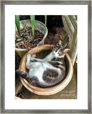 Cat In Planter Framed Print by Lauri Serene