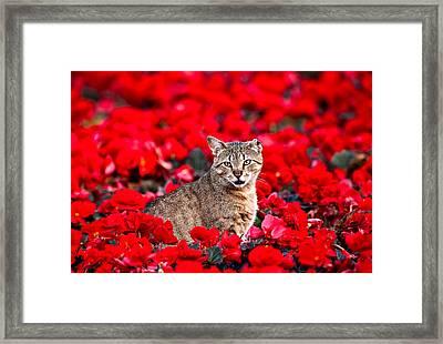 Cat In Red Framed Print