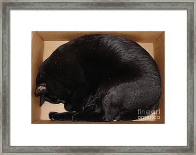 Framed Print featuring the photograph Cat In The Box by Kerri Mortenson
