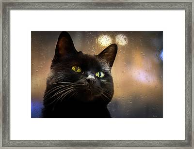 Cat In The Window Framed Print by Bob Orsillo
