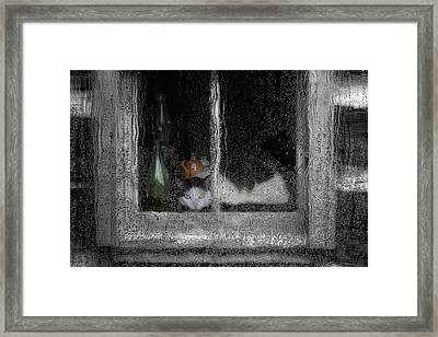 Cat In The Window Framed Print by Jack Zulli
