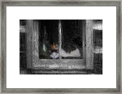 Cat In The Window Framed Print