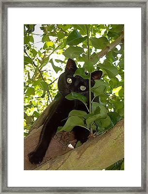 Cat In Tree Framed Print