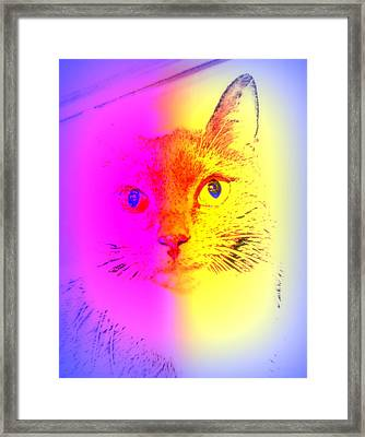 Do You Think Cats Can Be Jokers Too  Framed Print