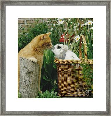 Framed Print featuring the photograph Cat Kisses Rabbit by Jeepee Aero