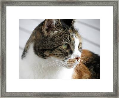 Framed Print featuring the photograph Cat by Laurel Powell