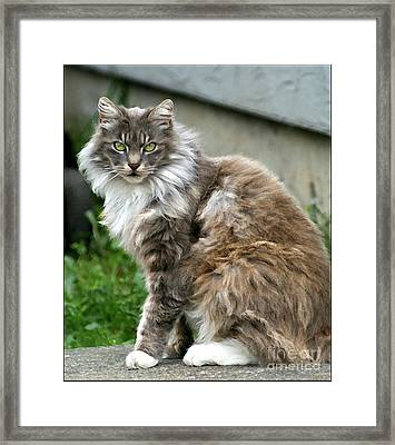 Framed Print featuring the photograph Cat by Leslie Hunziker