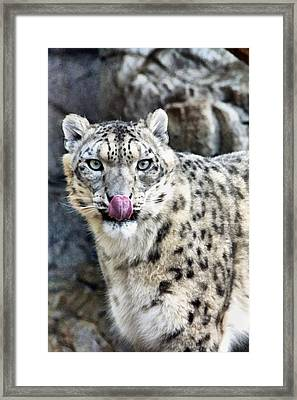 Cat Lick Framed Print