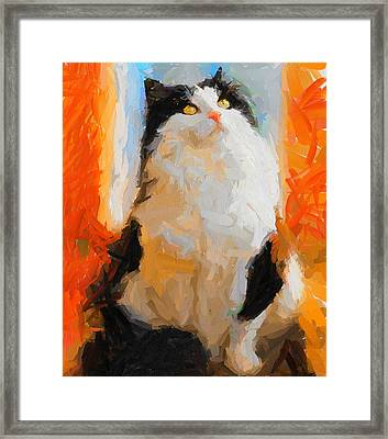 Cat Looking Up Framed Print by Yury Malkov