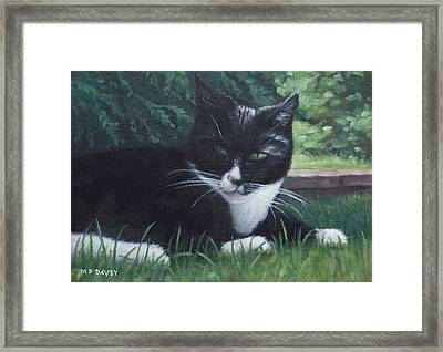 cat Framed Print by Martin Davey