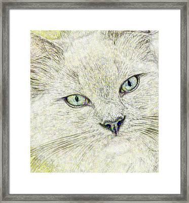 Cat - Mink Ragdoll - Smokey Blu Framed Print by Donna E Pickelsimer