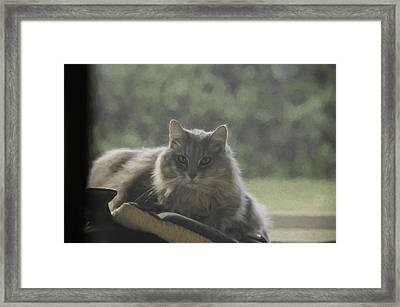 Cat N Saddle Framed Print