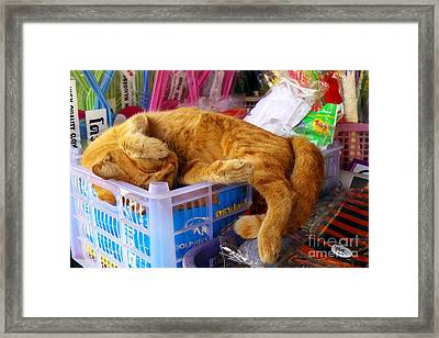 Cat Nap 2 Framed Print by Dean Harte