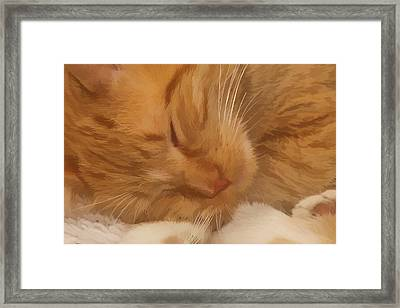 Cat Nap Framed Print