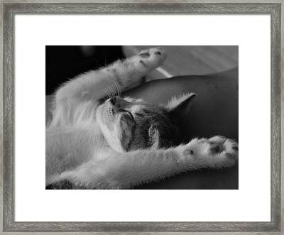 Cat Nap Bw Framed Print