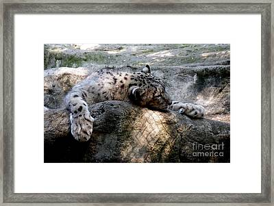 Cat Nap Framed Print by Chad Thompson